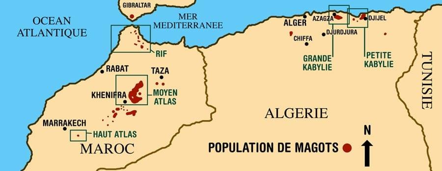 population des magots