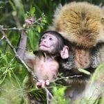 horaires d'été à la montagne des singes